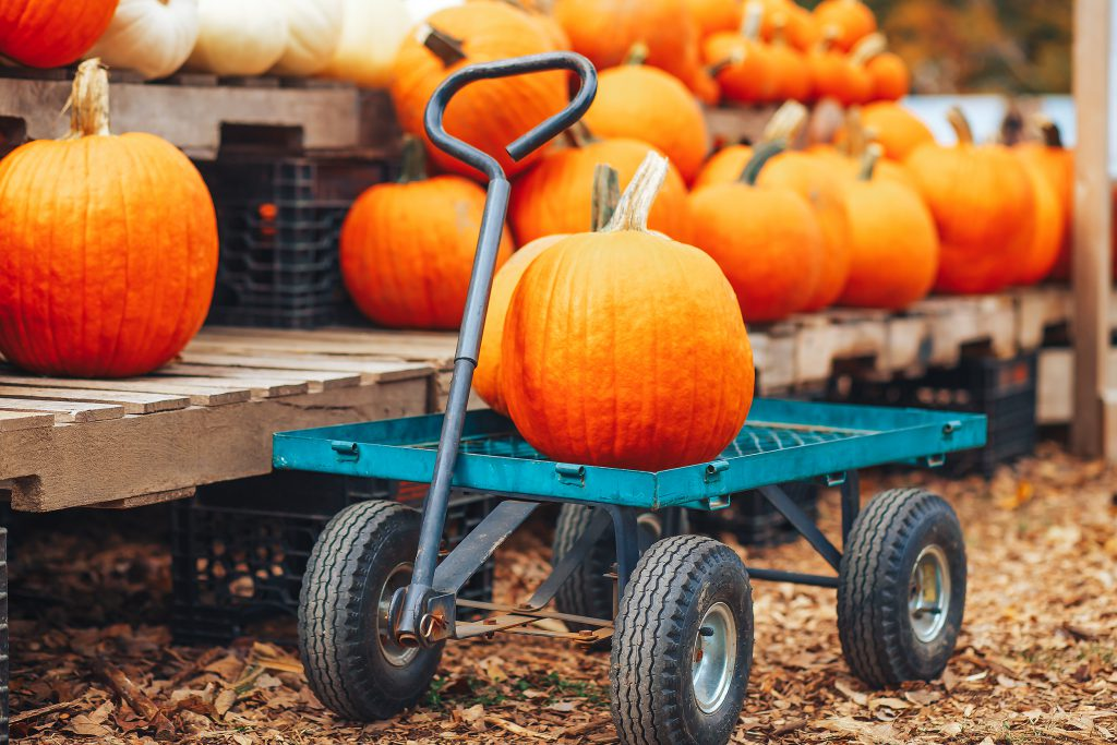Fun Activities to Enjoy this Fall